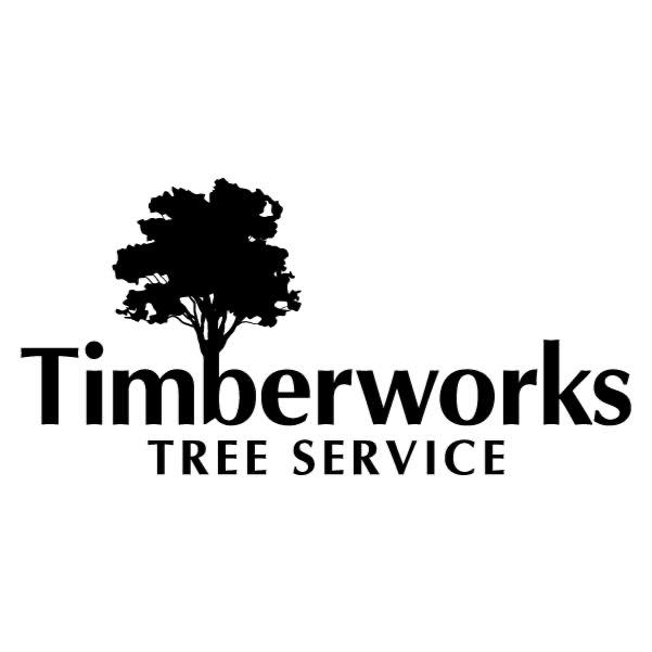Tallahassee's Trusted Tree Service
